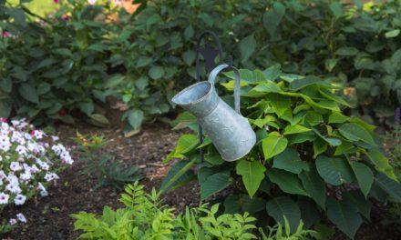 9 Tipps zur optimalen Gartenbewässerung
