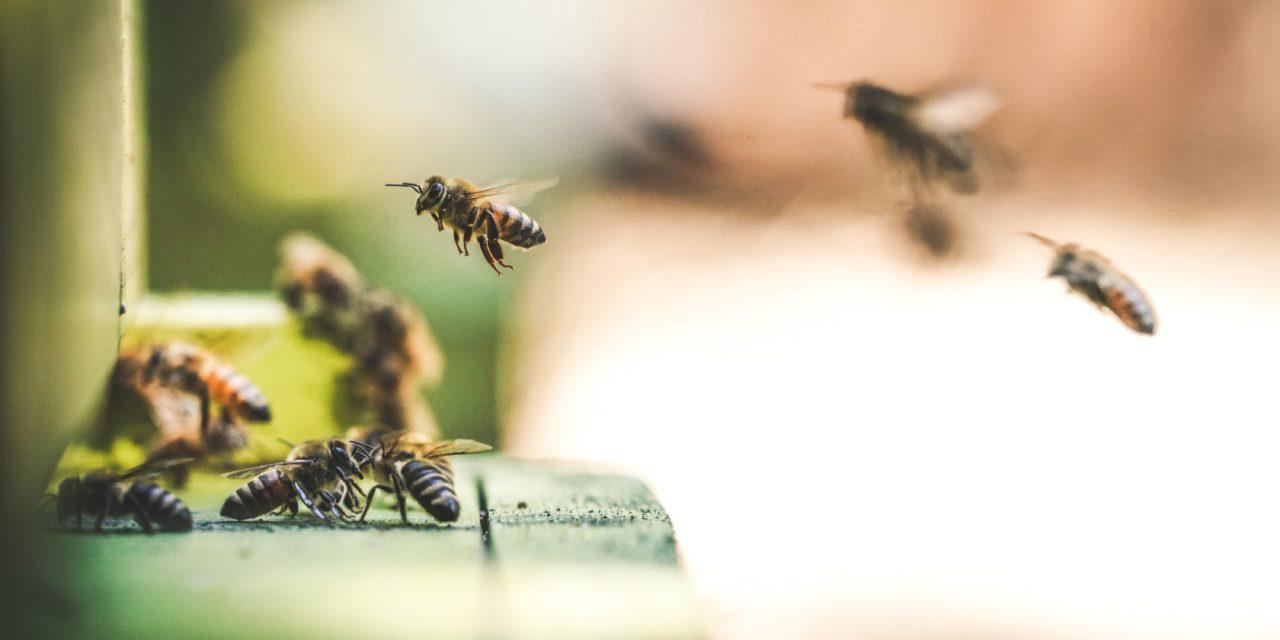 9 Gründe, warum du Bienen lieben solltest.
