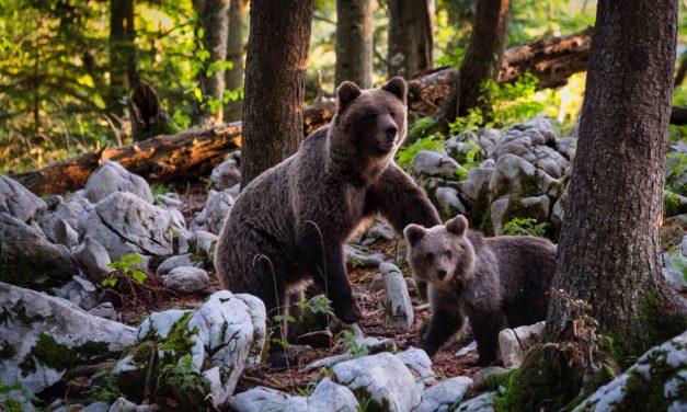 Unerwartete Freu(n)de  – 2 Tiere, die es 2019 nach Deutschland verschlagen könnte