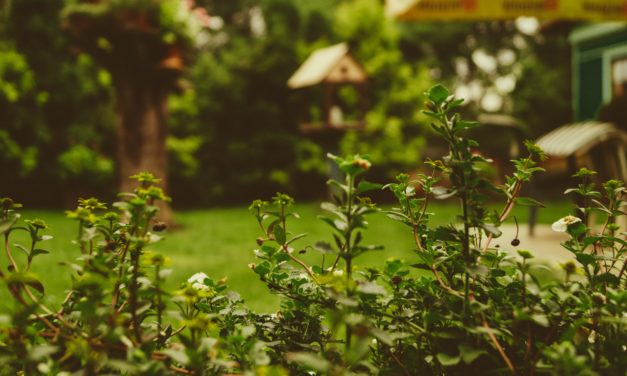 10 Bilder moderner vs bunter Gärten von Pinterest