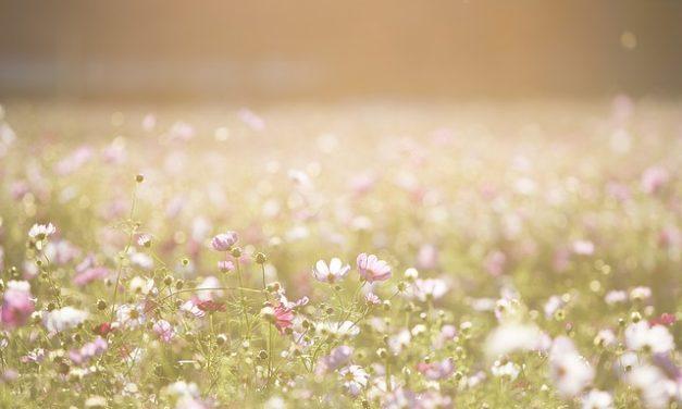 Blumenwiese Anlegen – kurz erklärt + 5 Inspirationen