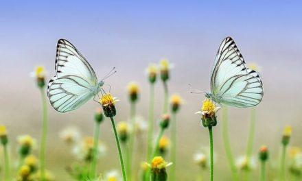 Schmetterlinge im Garten – So gelingt das Ansiedeln