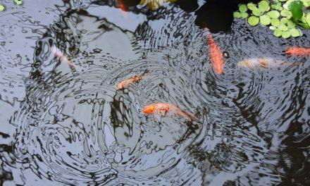 Teich selbst anlegen » In 5 Schritten zum eigenen Teich