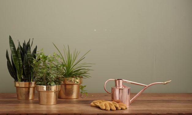 Blumen umpflanzen » So wachsen sie erfolgreich an