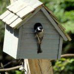4 Tipps für einen Tierfreundlichen Garten