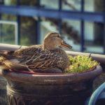 Urban Farming: Diese Tierarten darfst du im Garten halten!